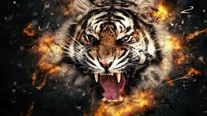 tiger face wallpaper hd. Contemporary Wallpaper Tiger  With Face Wallpaper Hd E