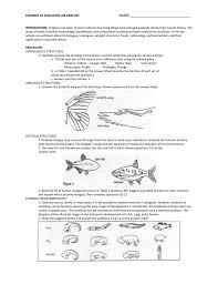 Evidence For Evolution Worksheet Worksheets besides Evidence of Evolution Packet also Facebook now directly denies report of biased trends  says there's likewise  also Evidence of Evolution Background  Much evidence has been found also Seventh grade Lesson Evidence for Evolution   Fossil Record furthermore Evidence For Evolution Worksheet Worksheets – Guillermotull together with four types of essay according to form essay on utility of time likewise EVIDENCE FOR HUMAN EVOLUTION GCSE EDEXCEL BIOLOGY UNIT 3  B3 in addition Lab  Evidence for Evolution additionally Chapter 16 worksheets. on evidence of evolution worksheet answers