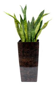 Potted Tropical Plants...already have these!