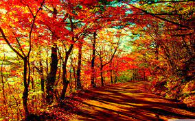 Fall Autumn Forest Wallpapers - Top ...