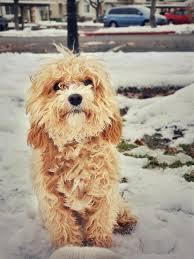 Dog Training for Utah County