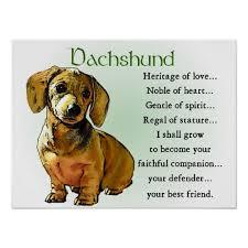 dachshund gifts dachshund posters prints