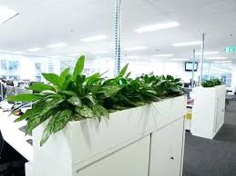 office planter. Office Planter Cubicle Planters To Buy Boxes . E