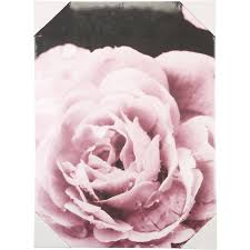design house 50x70cm canvas rose on canvas wall art big w with wall art home big w