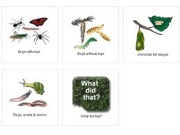 Bug Id Chart What Is This Bug What Is This Bug Manaaki Whenua