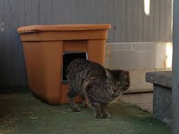 outdoor cat shelter design in pleasing diy feral
