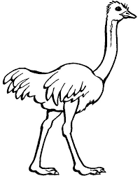 Small Picture Ostrich Image Coloring Page Color Luna