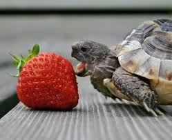 care of box turtles lovetoknow