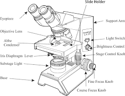 Substage Light The Microscope Diagram Quizlet