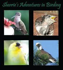 Bird Lady Blog - Home | Facebook
