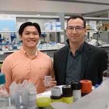 brain fertiliser nurtures new hope for stroke survivors