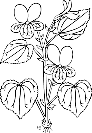 Small Picture parts of a plant coloring page parts of a flower coloring page