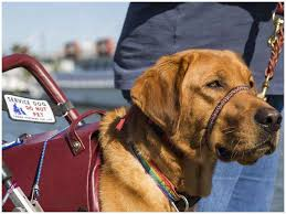 Doctors Note For Dog Whats New About Doctors Note For Service Dog