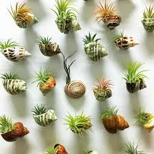air plants diy ideas in home62