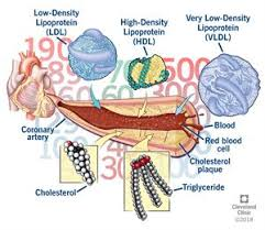 Cholesterol Lab Values Chart Understanding Your Cholesterol Numbers Cleveland Clinic