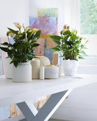 ... Gorgeous Home Interior Ornament With Various Indoor Plant Decoration :  Astonishing Picture Of Home Interior Decoration ...