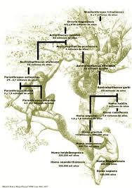 Hominid To Homosapiens Tree Human Evolution Tree