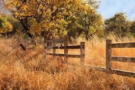 wooden farm fence. Picture Of Old Wooden Farm Fence In Long Yellow Winter Grass Stock Photo - 14196826 R