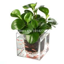 decorative plants for office. Decorative Pots For Outdoor Plants Creative Clear Tube Plant Pot Flower Self Watering Planter Office A