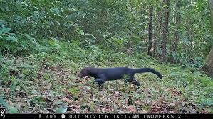 Using Trail Cameras in Costa Rica: The Tyra | Two Weeks Rica Spying on the Rainforest: -