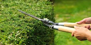 garden maintenance service. Commercial Cleaning Maroubra. And Gardening Garden Maintenance Service R