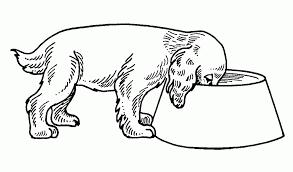 Disegni Da Colorare E Stampare Dei Cani E Gatti Timazighin Con Cani