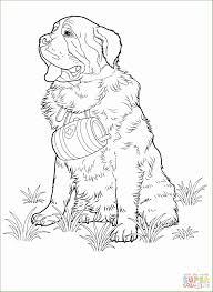 7 Beagle Kleurplaten 51685 Kayra Examples