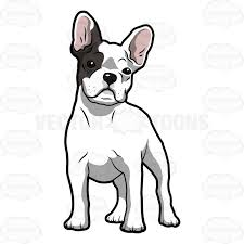 bulldog puppy clipart. Brilliant Bulldog White French Bulldog Puppy With A Patch Of Grey Over Its Right Eye To Clipart P