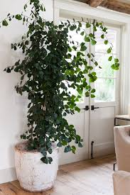 large indoor plants excellent tropical office