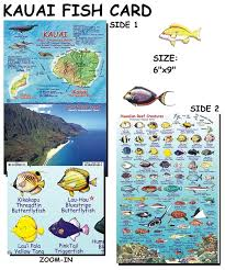 Oahu Fish Chart Kauai Reef Creatures Guide Fish Card