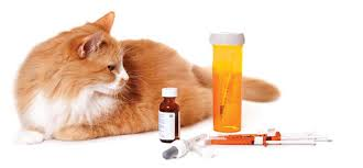 Feline Insulin Dosage Chart Feline Diabetes Mellitus Ivc Journal