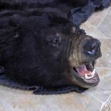 real black bear skin rug with head designs