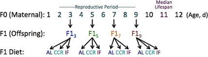 Maternal Age Alters Offspring Lifespan Fitness And