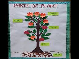 parts of plant model for students