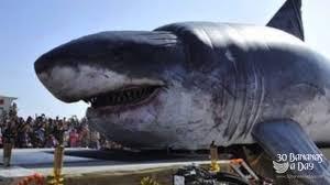megalodon shark. Delighful Shark Intended Megalodon Shark S