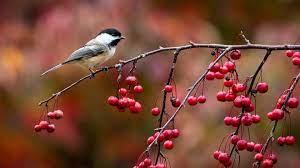 "Autumn Birds"" – John Clare | Essential Facts of Life"