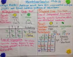 Mendelian Genetics Chart Mrs Paul Biology Mendelian Genetics Punnet Squares Glad
