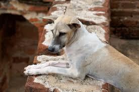 Znalezione obrazy dla zapytania pies