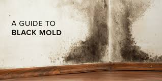 The Truth About Black Mold—And How You Can Stay Safe | SafeWise