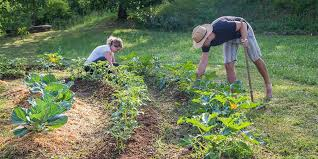 how to start a permaculture garden