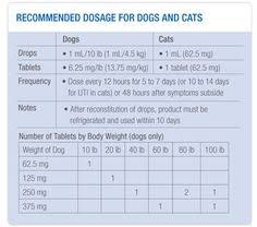 9 Best Cat Stuff Images Cats Cat Age Chart Cat Ages