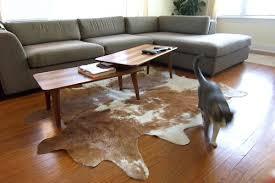 cowhide rug rugs ideas in decor 5 cow skin nz designs 6