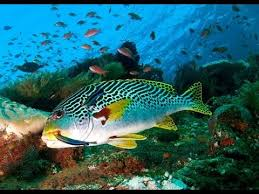 amazing underwater marine life amazing underwater marine life