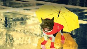 10 Must Have Products To Survive The Rain With Your Dog