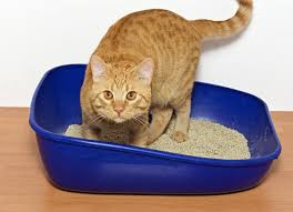 because painful and serious medical problems can cause cats to eliminate outside of litter boxes kitties who do so should always be examined first by a cat litter box