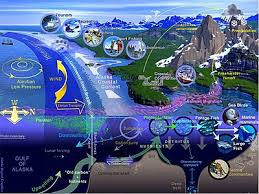 Bartons Cove Depth Chart Marine Life Wikipedia