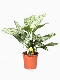 office plants for sale. pot plants office for sale a