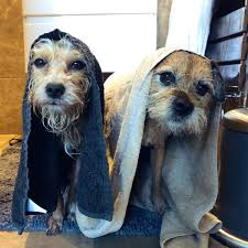 The big brother winner appeared on the itv show in an attempt to break the stigma. Kate Lawler On Twitter I Showered My Dogs And Now They Look Like They Re In Star Wars