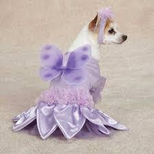 Image result for sugar plum fairy costume