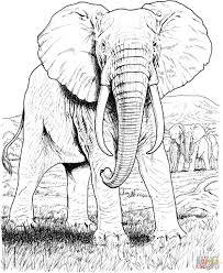 Incredible African Safari Animals Coloring Pages Cartoon Page Vector